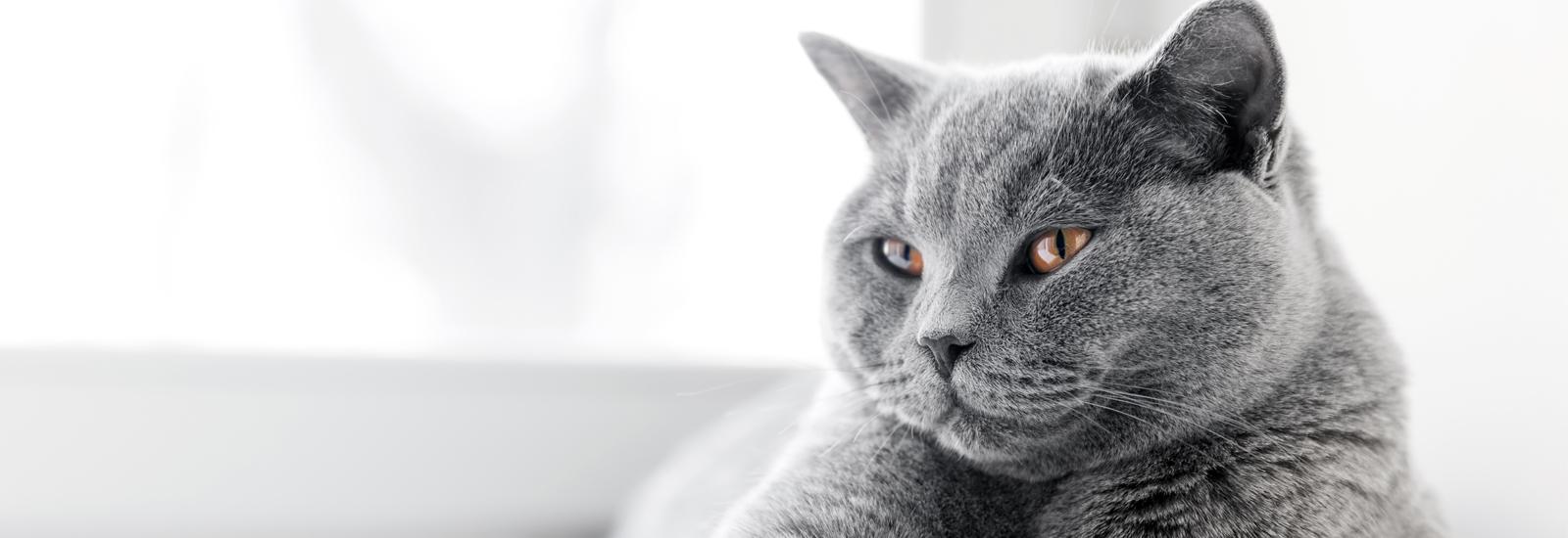 猫の目のトラブル