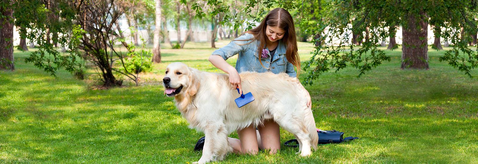 犬の換毛期