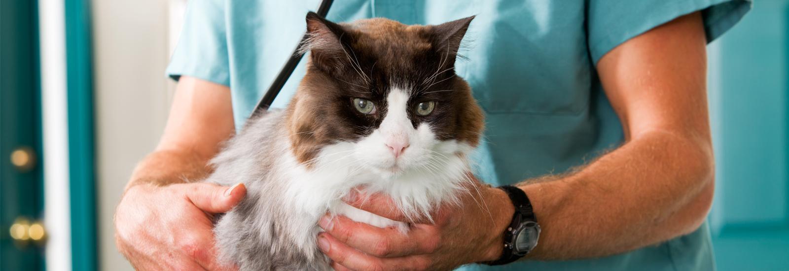 猫の血圧について